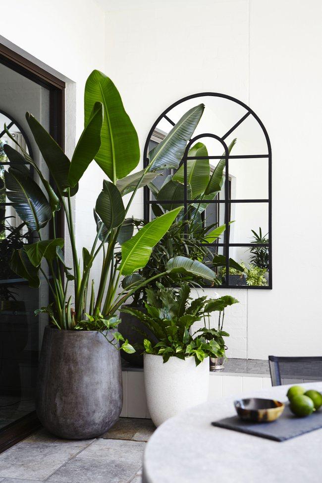 biljke i benefiti