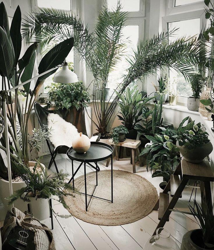 biljke u kući