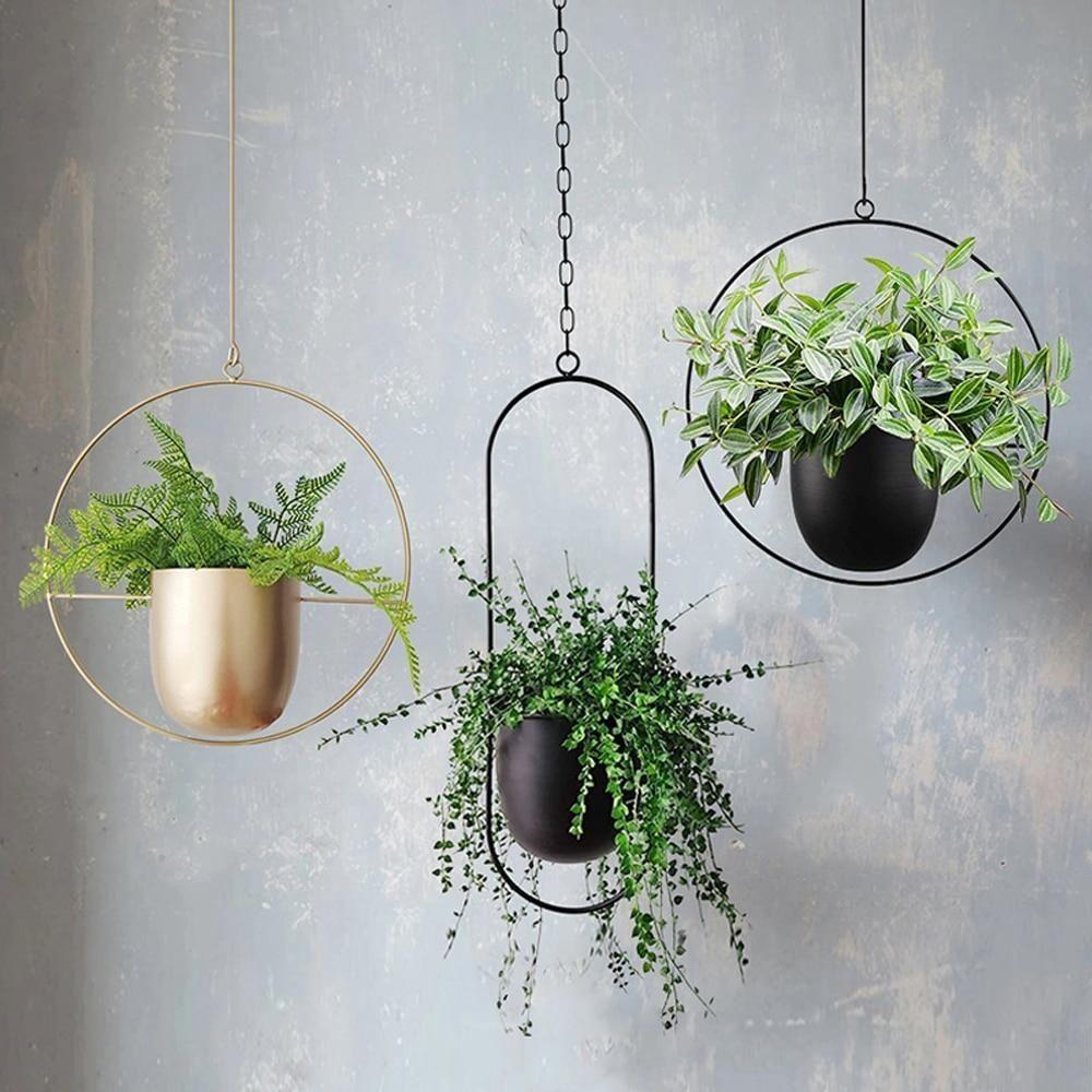 viseća biljka