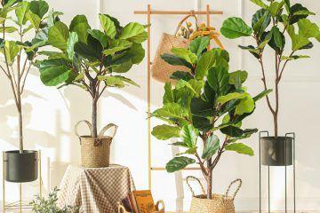 pet tipova biljki